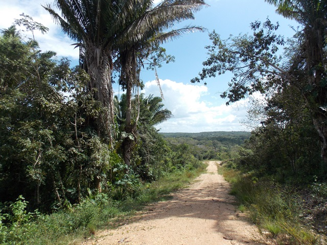For Sale: 5 Acres of beautiful land in Bullet Tree Village, San Ignacio Belize